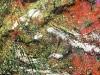 carlodelli-9a-italia-sole-sullacqua